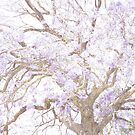 Branching Jacarandas by ShotsOfLove