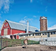 Harvest Hill Farms Photographic Print