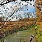 Rome Pond Wildlife Area by EBArt