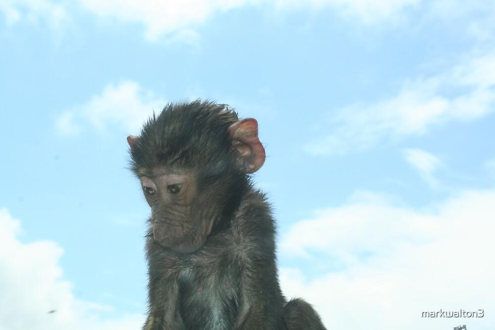 baby monkey by markwalton3