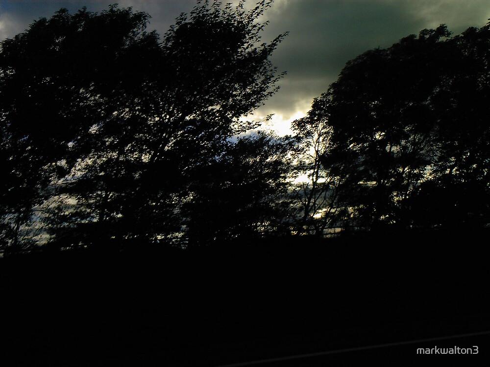 shadows by markwalton3
