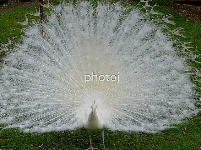photoj  animal- bird by photoj
