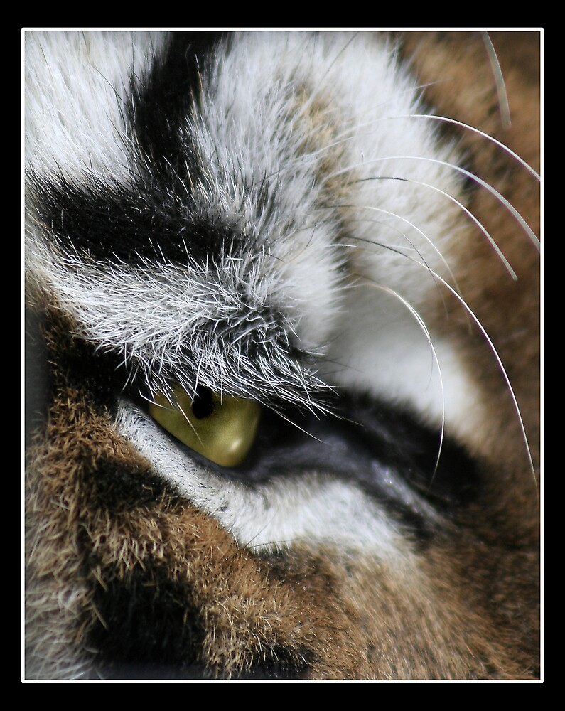 Hunters Eye by Moth