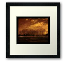 Flowers in a field Framed Print