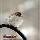 Sparrow Merry Christmas by WalnutHill