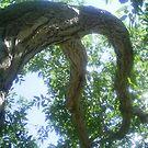 bent over branch by oilersfan11