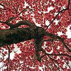Up A Tulip Tree by WildestArt