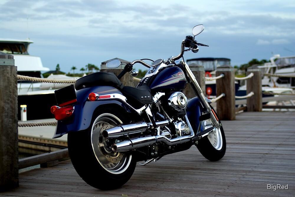 Harley II by BigRed