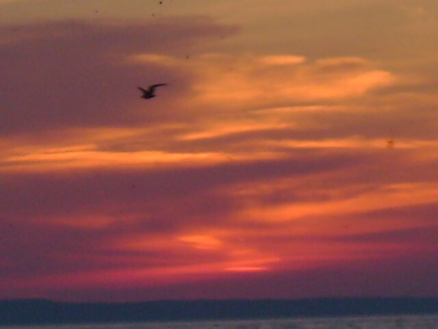 Bird at sunset by Robert Lake