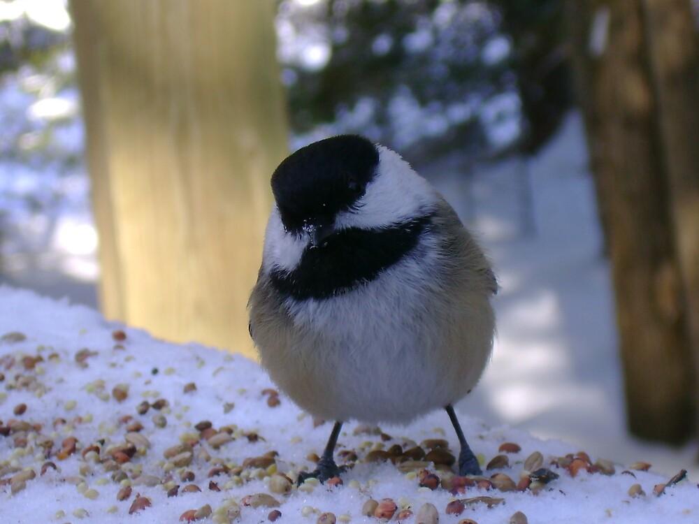 Chickadee by Robert Lake
