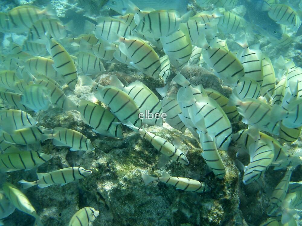 Underwater Scramble by elbee