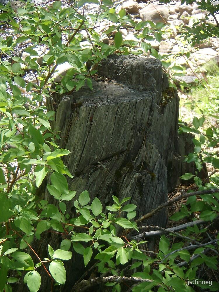 Wood Stump by jjstfinney