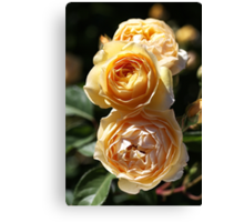 Beauty Of The Rose Canvas Print