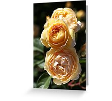 Beauty Of The Rose Greeting Card