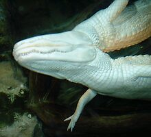 Water Croc by Meli