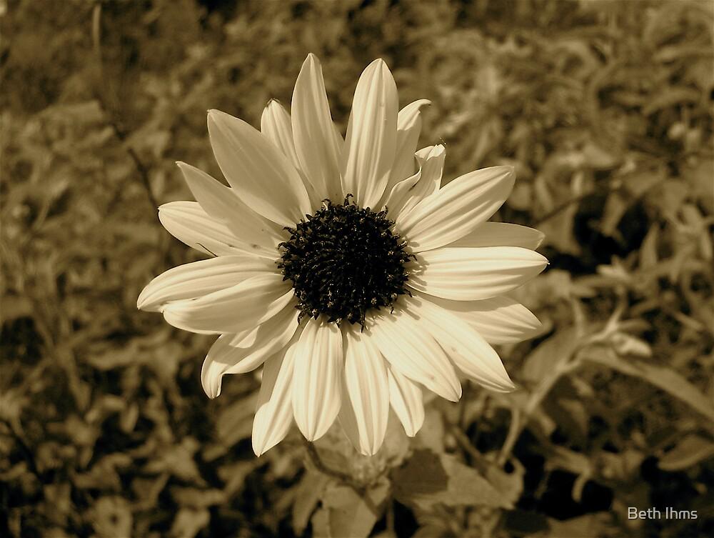 Daisy by Beth Ihms