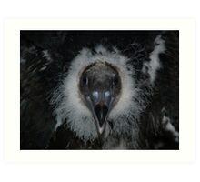 Baby Turkey Vulture, 6 weeks old Art Print
