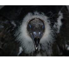 Blue Eyed Turkey Vulture Photographic Print