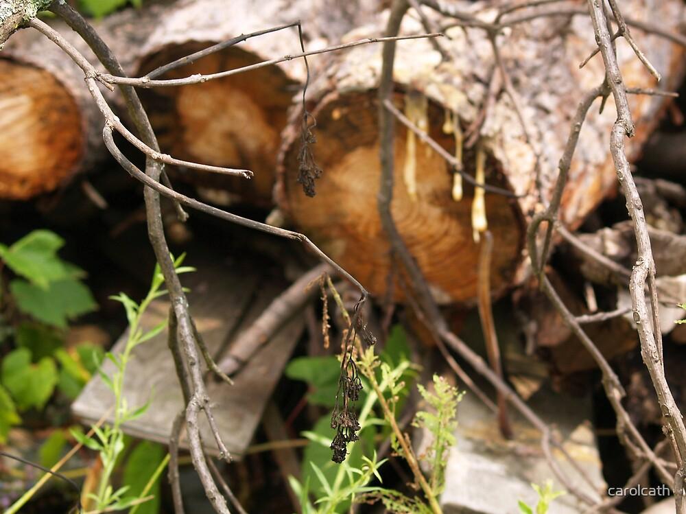 Wood Life by carolcath