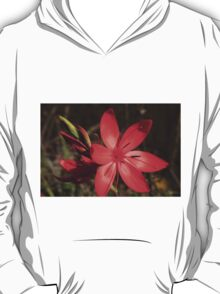 Red River Lily (Hesperantha coccinea) T-Shirt