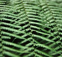 Ferns by Rob Leighton