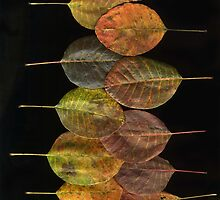 Smokebush by Barbara Wyeth