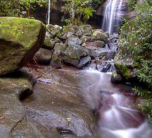 Buderim Forest Park by Underload