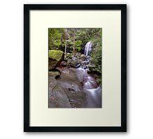 Buderim Forest Park Framed Print