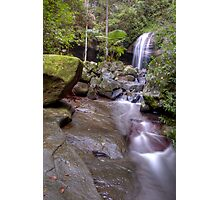 Buderim Forest Park Photographic Print