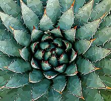 Agave by Bill Serniuk