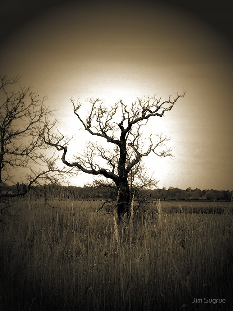 """Bristol Tree"" by Jim Sugrue"