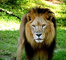 King of the Jungle by Jim Sugrue