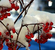 Red ice by Missy