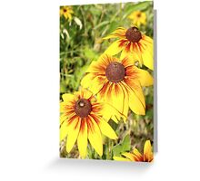 3 yellow sunflowers all in a row Greeting Card