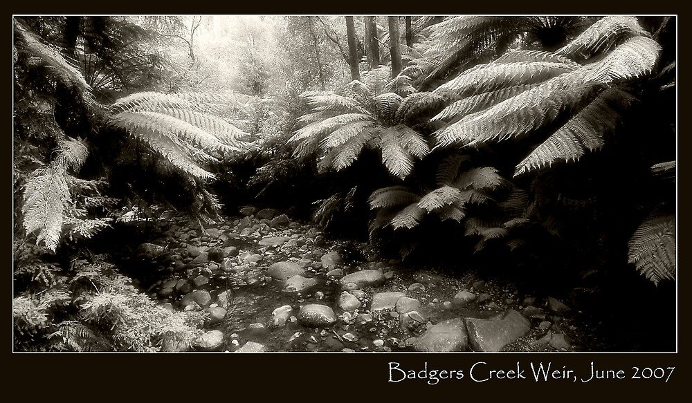 Badgers Creek by Sue Wickham