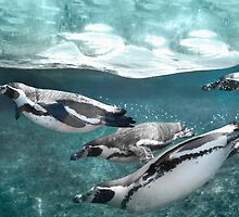 Penguin Plunge by Andrew Bret Wallis
