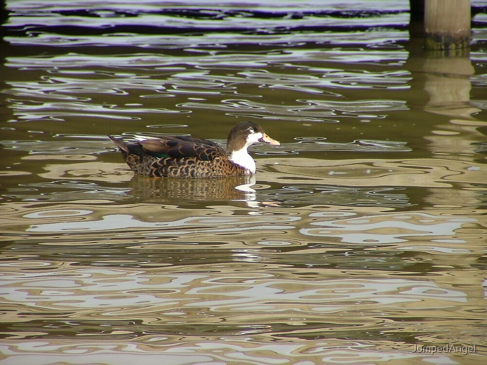 Vi a duck? by JumpedAngel