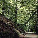 Woods at Rydal Lake District England 198405200009 by Fred Mitchell