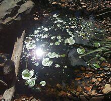 Sunny Pond by dachli