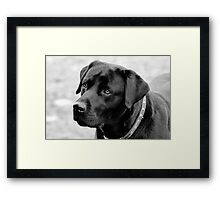 Shane, Black Labrador Framed Print