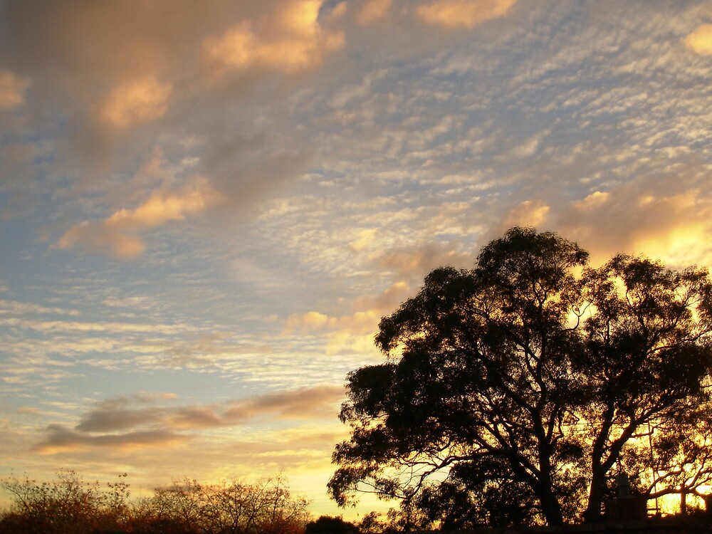 Australian Evening2 by Toast