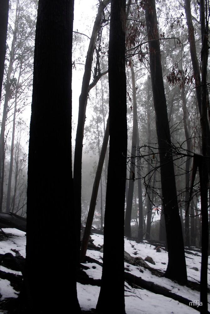 black wood by milja