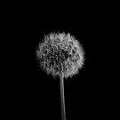 Seed Head by Ben Herman