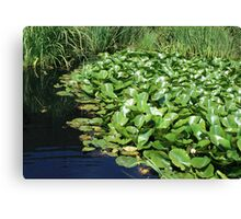 WATER LILLIES 2 Canvas Print