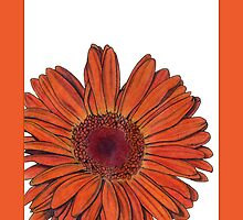 Gerbera Mother's Day by Mariana Musa