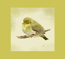 Young Wood Warbler by Bamalam Art and Photography