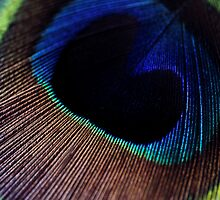 Peacock feather by Marcella Davie