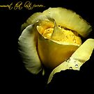 Yellow Rose by Julie Just