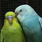 love birds by Jelynn