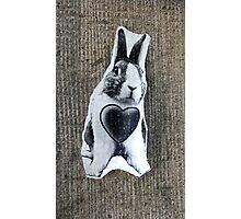 Strange Bunny Photographic Print